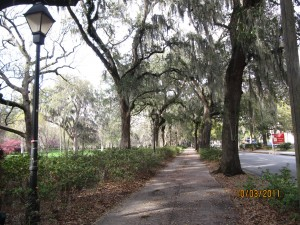 One of many beautiful tree lined streets.  We love this place!!!