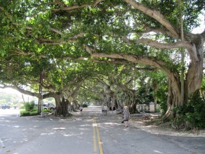 Coral Gables - large trees line the road