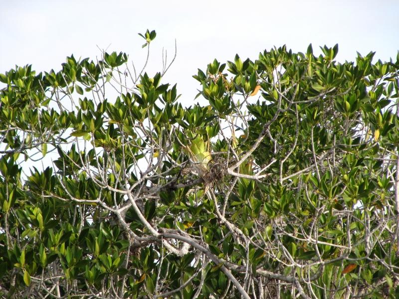 Wandering Enterprise Everglades National Park Part 2