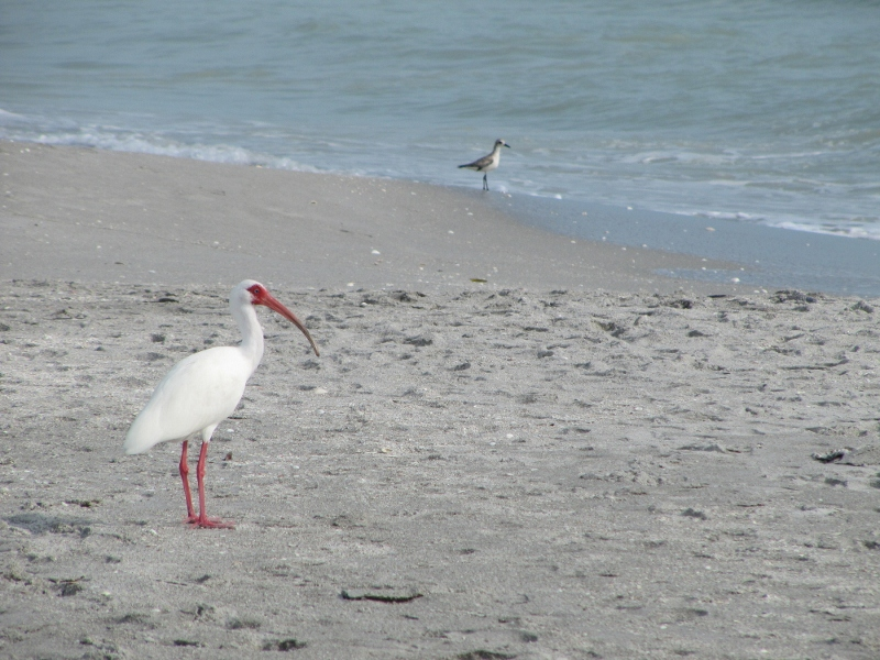 """These beaches all seem to have the similar sugar white sand which is made of 99% quartz. Siesta Key also has a bunch of washed up shells. We find ourselves addicted to what they call """"shelling"""" - the search for the largest perfect shell."""