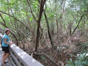 ...mangroves...