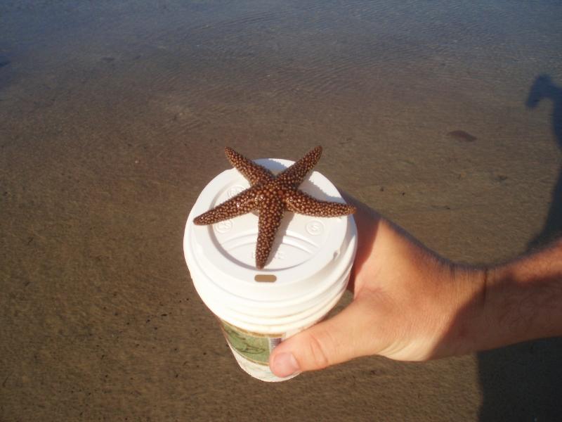 ...star fish...